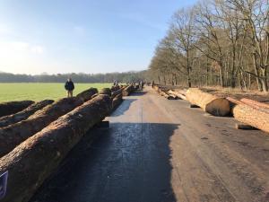 Bosgroepen veiling Arnhem