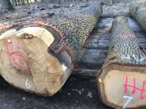 Eiken boomstammen